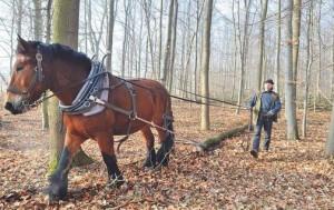 20170120 Rückepferde im Wald – Romantik und Wirtschaftlichkeit eines alten Berufes